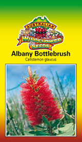 albany-bottlebrush